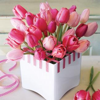 cute tulips pink flowers - photo #24