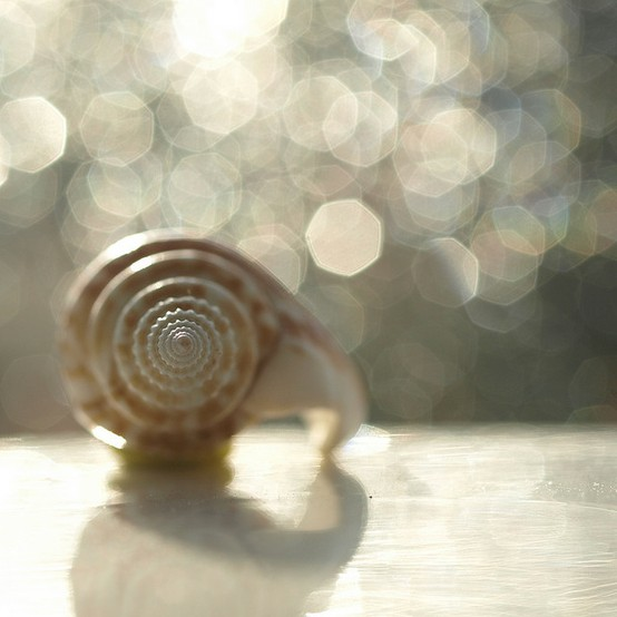 Image of a shell photography