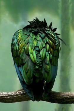 Emerald Green | Feathers | Parrot | Blog White Linen Interiors Miami