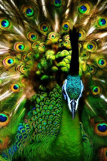Emerald Green | Feathers | Peacock| Blog White Linen Interiors Miami